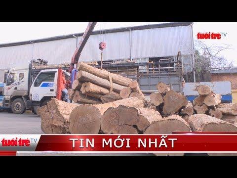 ⚡ Tin mới nhất | Ngụy trang 13 mét khối gỗ lậu giữa đống khoai mì