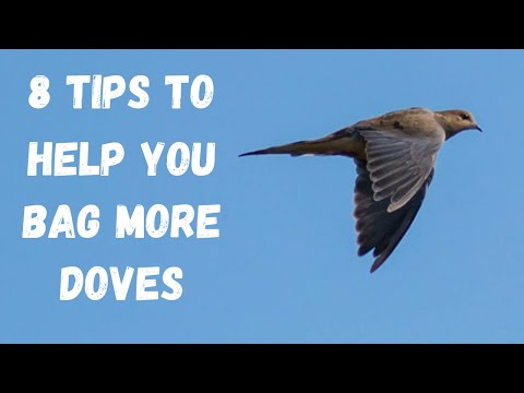 8 Tips For Dove Hunting