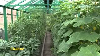 Выращивание томатов видео обучение(, 2015-04-14T19:22:15.000Z)