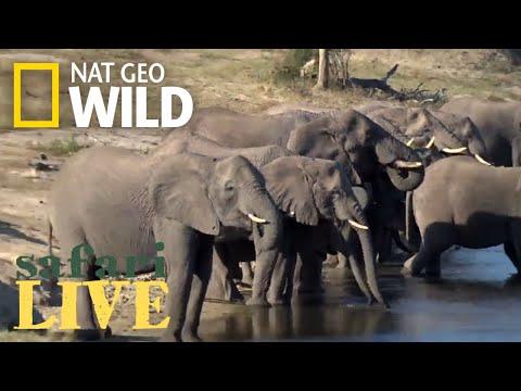 Safari Live - Day 165   Nat Geo Wild