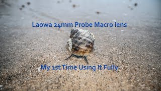 Using the Laowa 24mm macro Probe lens & Sony A7r3 on the beach