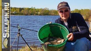 Рыбалка: подлещик весной на фидер на малой речке [salapinru].