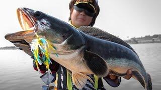 เทคนิคการใช้เหยื่อใบพัดผิวน้ำ Slater ในการตกปลาชะโด