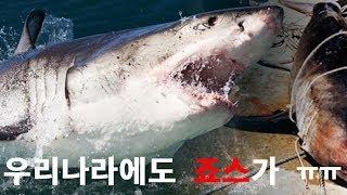 [제품소개] 상어 퇴치용 팔찌 입니다..