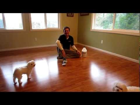 Dog Slipping Floor - Treatment Solution - SlipDoctors Floor Grip Review