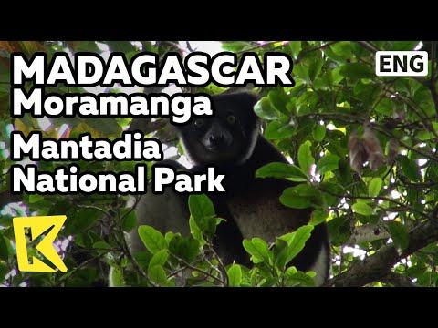 【K】Madagascar Travel-Moramanga[마다가스카르 여행-모라망가]만타디아 공원/Mantadia National Park/Lemur/Andasibe/Sifaka