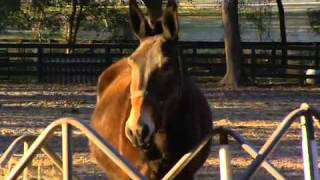 Repeat youtube video Mule Mom show 13 W-Kids-H.264.mov