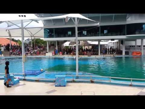 Dolphins and sea lions performances in Singapore 2