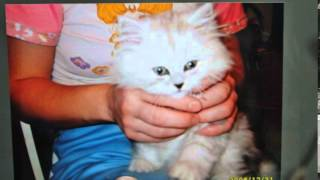 моему коту ДЖОРДЖУ  посвящается