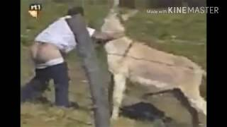When animals attack to people।।funny animals