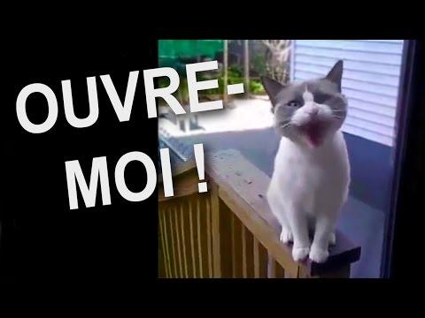 OUVRE-MOI - PAROLE DE CHAT