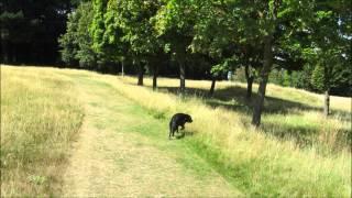 Old Eastleigh Golf Course Dog Walk  Hampshire