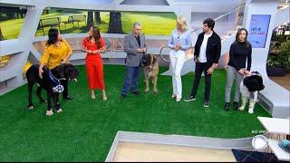 Conheça as três maiores raças de cachorros do mundo