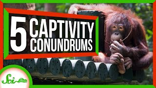 Curious Orangutans and 4 Other Animals a Bit Different in Captivity