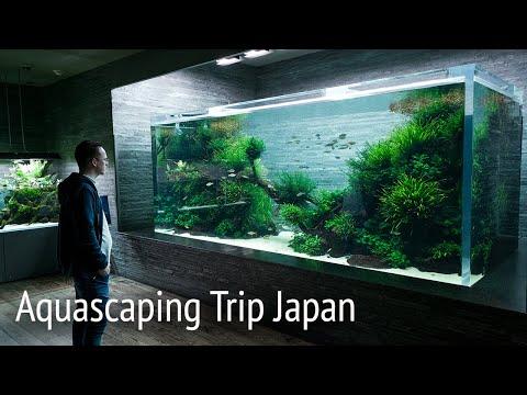 beautiful-ada-nature-aquarium-gallery-and-aquascape-timelapse