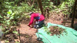 Video: Un millar de exguerrilleros de las FARC desminarán Colombia