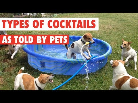Types of Cocktails As Told By Pets