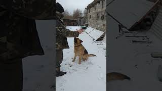 Как , собака считает пальцы ))