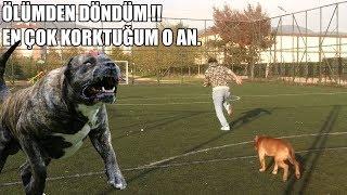 ÖLÜMDEN DÖNDÜM !! ( Korkudan Ölüyordum ! ) Pitbull Saldırısı ve Köpek Saldırılarını Eğitimle Engelle