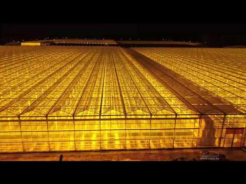 Теплицы в Нариманова. Тюмень. 18 тонн огурцов и помидоров в сутки!  🍅🥒