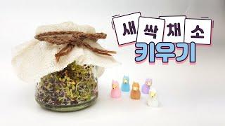 [방구석 교육] 원예편 - 새싹채소 키우기