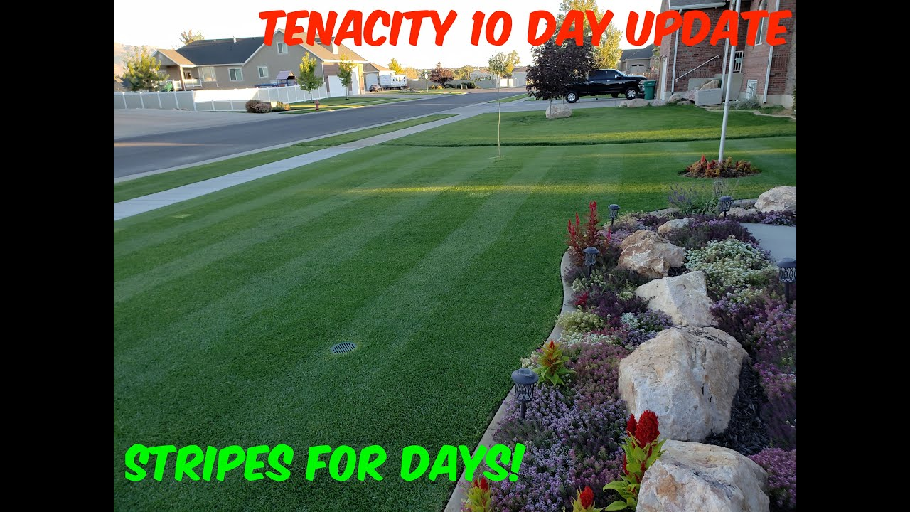 Day 10 after Tenacity application herbicide results
