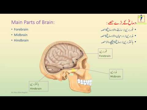 8th Science Lecture 01.5 || Main Parts of Brain ...
