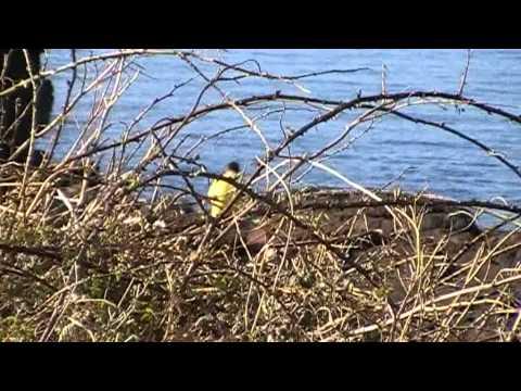 Pembrokeshire Coast Path Hike, a video diary.