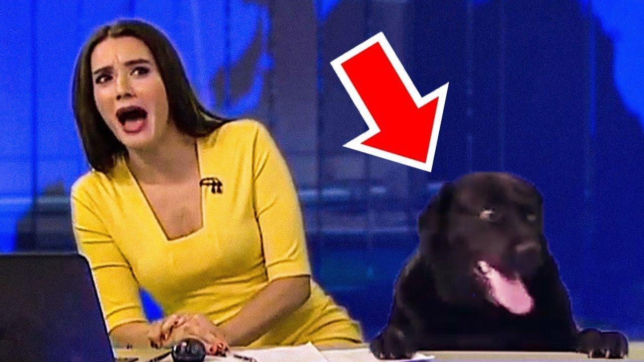 20 เหตุการณ์สุดเฟลในระหว่างการรายงานข่าวทางทีวี (ไม่น่าเชื่อ)