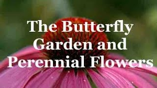 The Butterfly Garden And Perennial Flowers