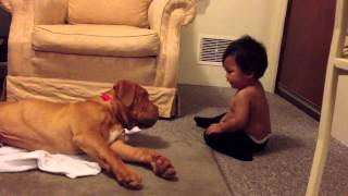 1 Year Old Girl and 5 Month Old French Mastiff