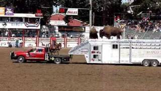 One-armed bandit John Payne at St. Paul, OR rodeo