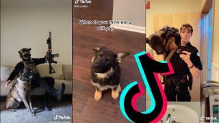 Amazing k9 Police Dogs TikTok Compilation #1   Dogs Of TikTok