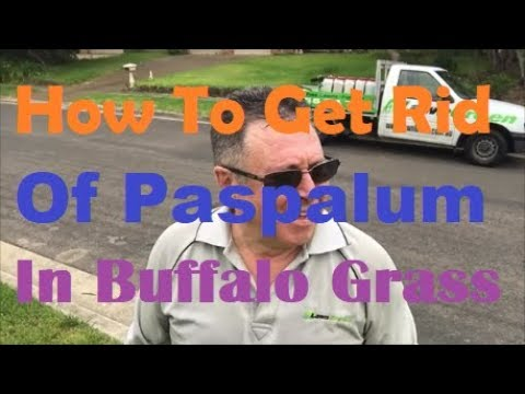 how to get rid of paspalum