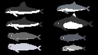 Porpoises - Sea Life - Learn Animals - The Kids