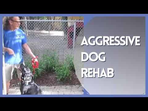 Aggressive Dog Rehab Solid K9 Training