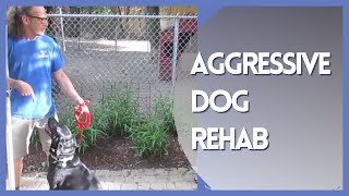 Aggressive Dog Rehab Solid K9 Training
