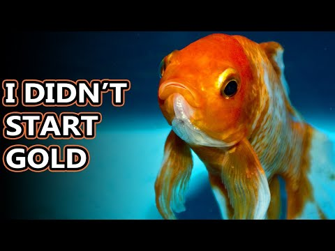 Goldfish Facts: Some Of The Most Popular Pets | Animal Fact Files