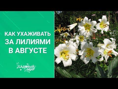 Вопрос: Какая почва нужна лилиям?