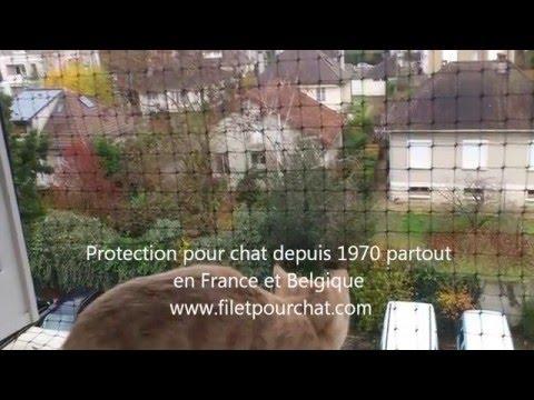 Filet de protection pour chat la fenetre www for Protection fenetre pour chat