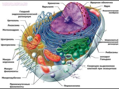 Как расшифровать анализы Свертывающая система крови