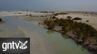 A look at Jebel Ali wetland sanctuary