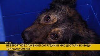 Сотрудники МЧС вытащили из ледяной воды тонущую собаку