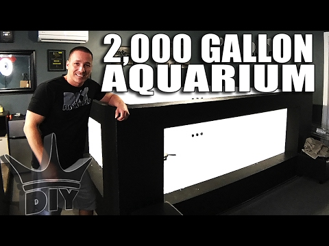 LIVE! Aquarium gallery update & working on the 2,000 gallon tank!