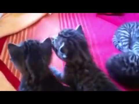 Katzen Backe Backe Kuchen By Katzen