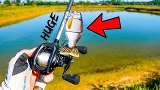 Fishing HUGE Swimbaits & Worms for BIG Pond Bass!!!