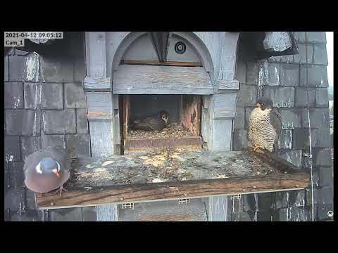 Des pigeons s'invitent