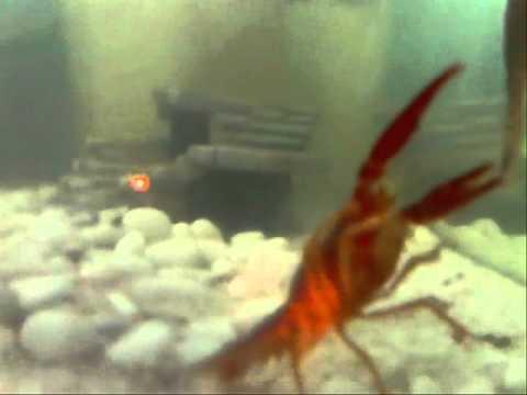 White Small Aquarium Theme