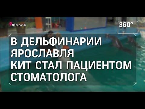 В дельфинарии Ярославля кит стал пациентом стоматолога