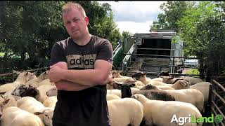 Dipping sheep in Co. Carlow with a mobile dipping truck